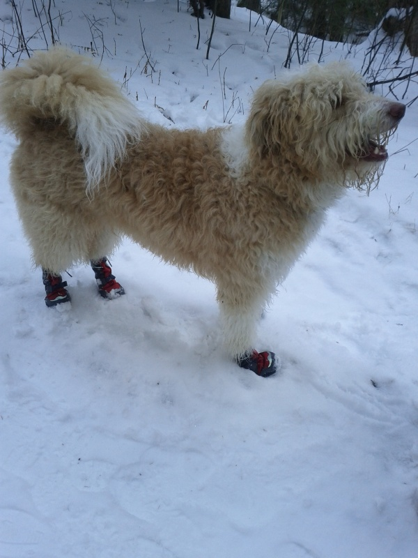 The front boots had a tendency to work their way down, until they eventually flew off when he put on a burst of speed.