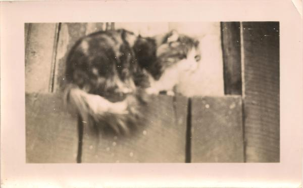 cat pictures - common even in 1945