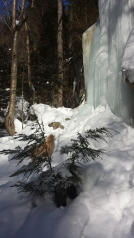An icy waterfall - in summer, this is just rocks that are sometimes damp