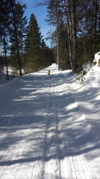 Mysteriously, the rail trail isn't on the Algonquin park site or front office list of 'groomed trails' (and therefore not on the 'no dogs list'), but had lovely 'natural' grooming.