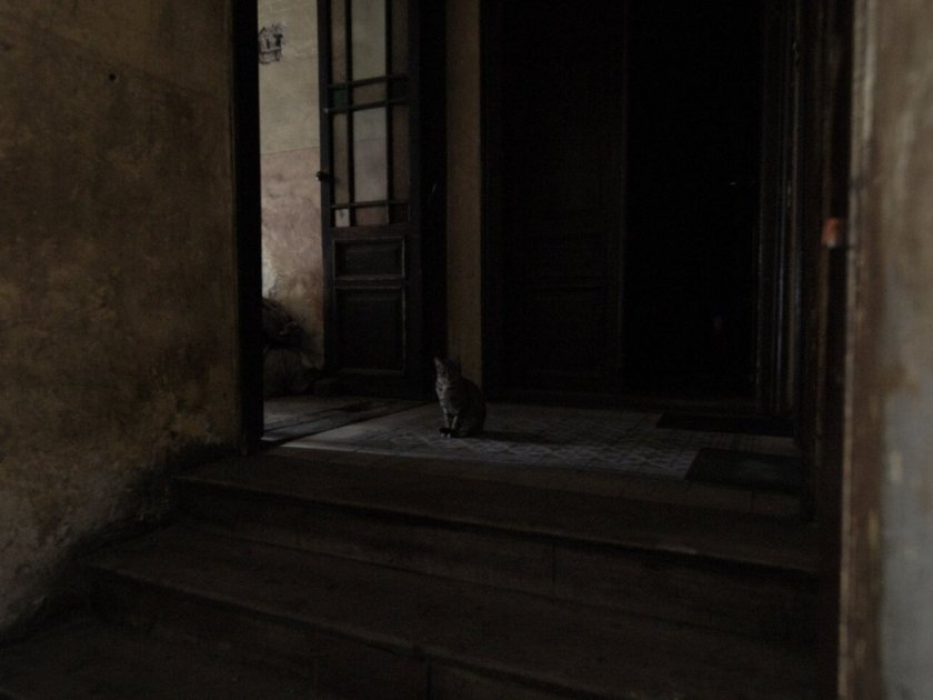 the_cat_by_kubica